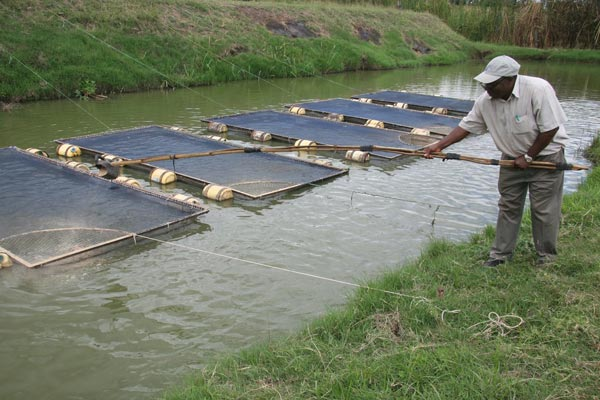 Fish farming business in nigeria how to start nigerian for How to start fish farming