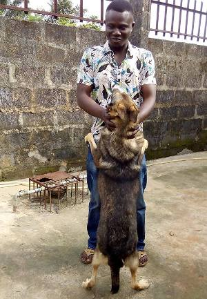 dog breeding business in nigeria