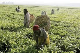 how-to-start-agriculture-business-in-nigeria